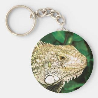 Iguanas Llavero Redondo Tipo Pin