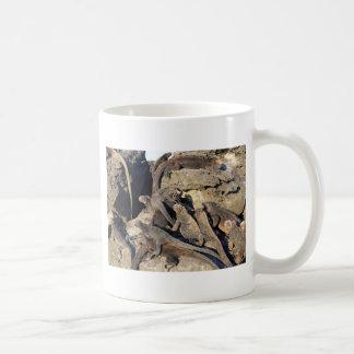 Iguanas marinas en roca volcánica, islas de las taza clásica