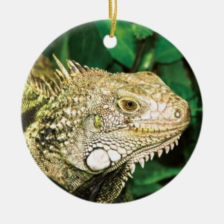 Iguanas ornament for animal lovers