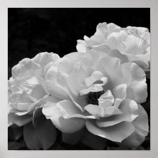 II color de rosa Noir Póster