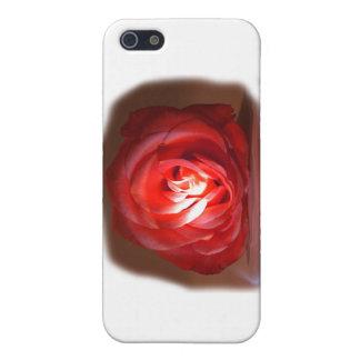 Iimage puesto de relieve rosa rosado iPhone 5 funda