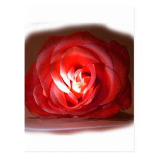 Iimage puesto de relieve rosa rosado tarjeta postal
