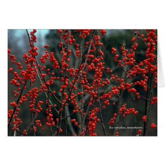 Ilex verticillata, winterberry card