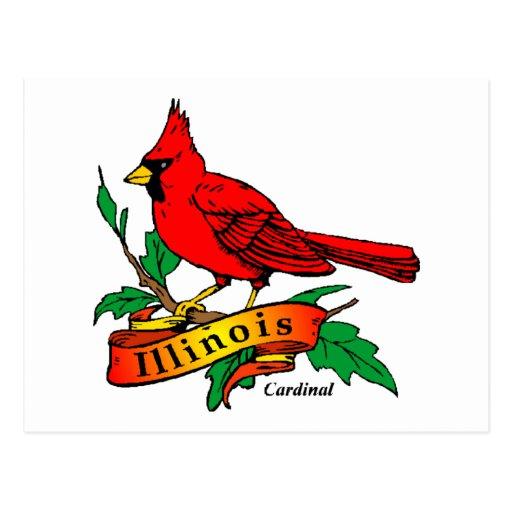 Illinois State Bird - Cardinal Postcard