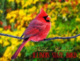 illinois state bird postcards zazzle