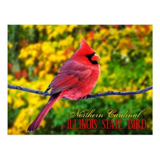 illinois state bird northern cardinal postcard zazzle com