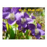 Illinois State Flower: Violet Postcard
