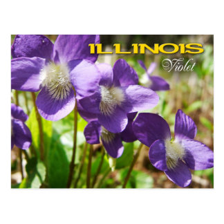 Illinois State Flower: Violet Postcard