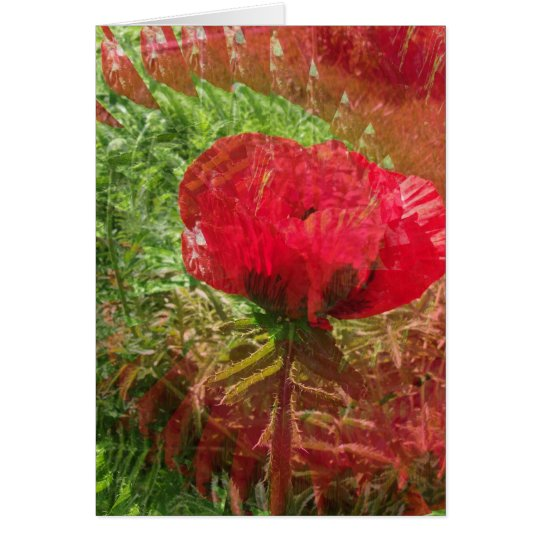 Illlusion Of A Poppy Card