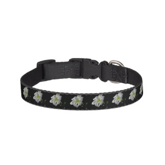 Illuminated like Outline of a White lily Flower Pet Collar