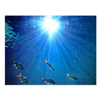Illuminated School of Fish Postcard