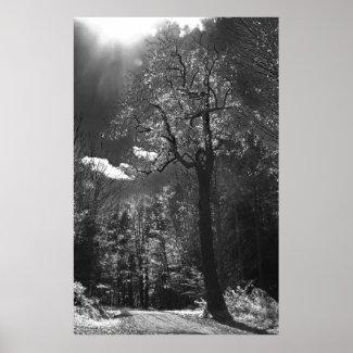 Illuminated Tree Print