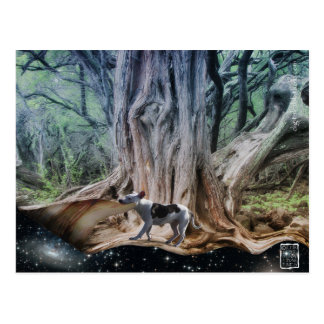 Illusion (Maisie) Postcard