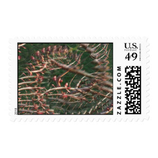 Illusion of a Fractal Postage