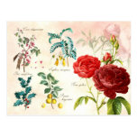 Illustrated flowering plants postcards