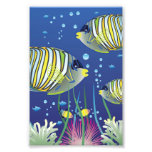 Illustrated Tropical Fish Photograph