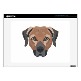 Illustration Dog Brown Labrador Acer Chromebook Decals
