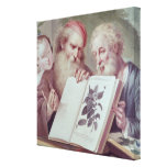 Illustration from Hortus Cliffortianus Canvas Print