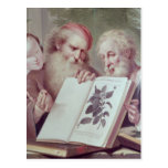 Illustration from Hortus Cliffortianus Postcard