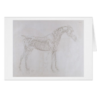 Illustration from 'The Anatomy of the Horse, inclu Greeting Card