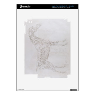 Illustration from 'The Anatomy of the Horse, inclu Decal For iPad 3