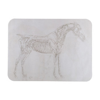 Illustration from The Anatomy of the Horse inclu Magnet