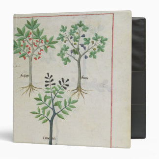 Illustration from the 'Book of Simple Medicines' 2 Binder