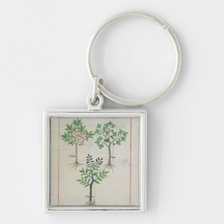 Illustration from the 'Book of Simple Medicines' 2 Key Chain
