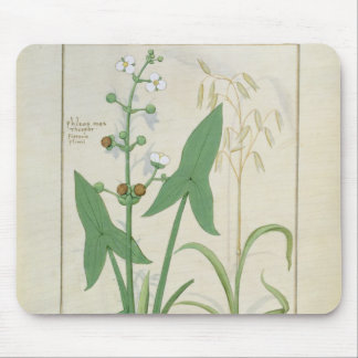 Illustration from the 'Book of Simple Medicines' 2 Mouse Pad