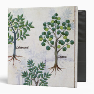 Illustration from the 'Book of Simple Medicines' 3 Ring Binder