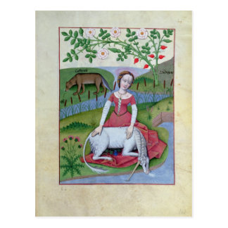 Illustration from the 'Book of Simple Medicines' Postcard