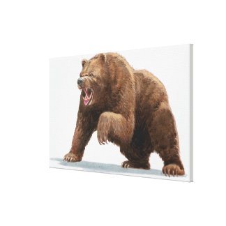 Illustration of a Brown bear Canvas Print