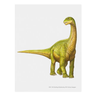 Illustration of a Camarasaurus Postcard