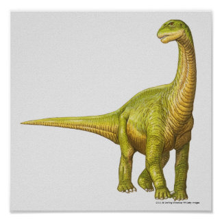 Illustration of a Camarasaurus Poster