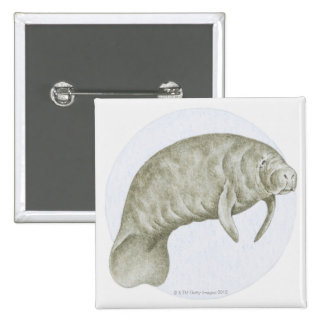 Illustration of a Manatee (Trichechus sp.) Pin