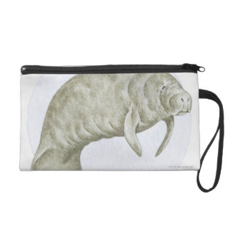 Illustration of a Manatee (Trichechus sp.) Wristlet Purse