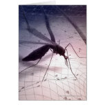 Illustration of a mosquito biting card