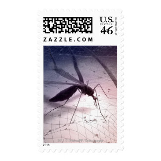 Illustration of a mosquito biting postage stamps