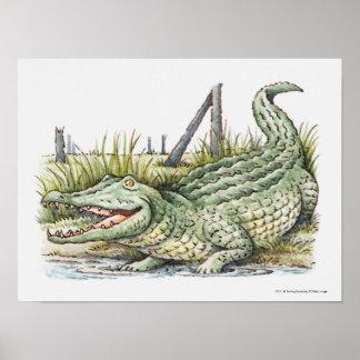 Illustration of alligator on the shore poster