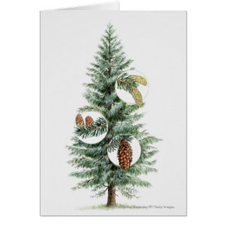 Illustration of coniferous tree with cones card