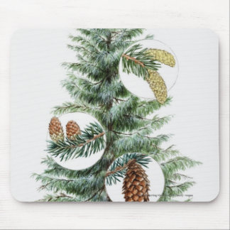 Illustration of coniferous tree with cones mouse pad