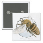 Illustration of European Honey Bee 2 Inch Square Button