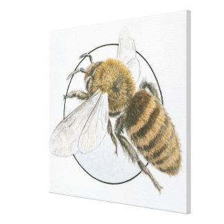 Illustration of European Honey Bee Canvas Print