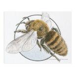 Illustration of European Honey Bee Post Card
