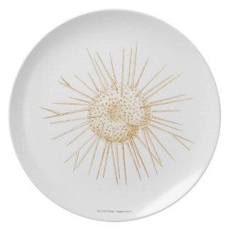 Illustration of foraminiferan shell plate