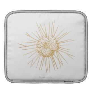 Illustration of foraminiferan shell sleeve for iPads