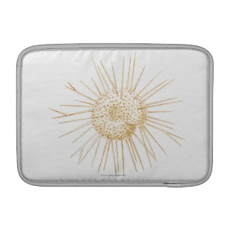 Illustration of foraminiferan shell sleeve for MacBook air