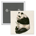 Illustration of Giant panda feeding on bamboo 2 Inch Square Button