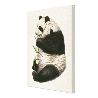 Illustration of Giant panda feeding on bamboo Canvas Print