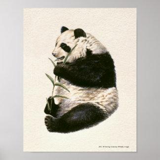 Illustration of Giant panda feeding on bamboo Poster